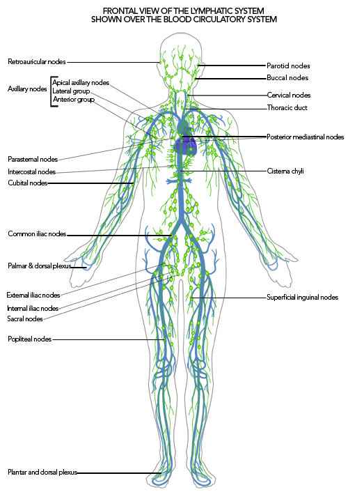 Lymphatic Cleanse With Whole Body Vibration Therapy Machine