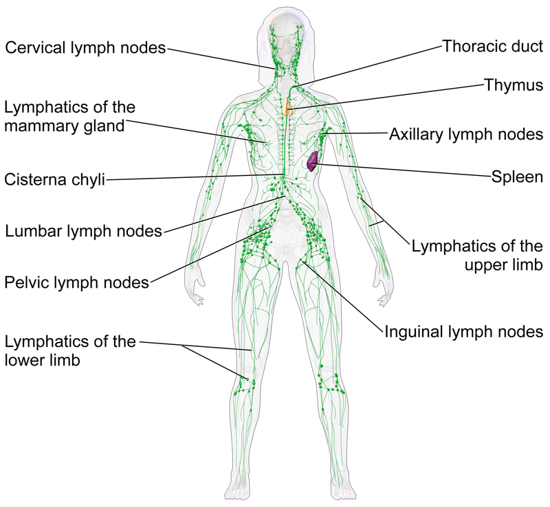 Lymphatic Cleanse Made Possible With Whole Body Vibration Therapy